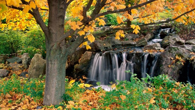 Autumn and waterfall