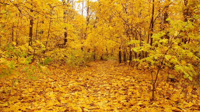Autumn yellow color