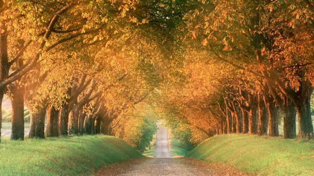 Autumn road to far far away