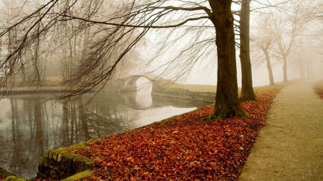 Autumn Wallpapers fog
