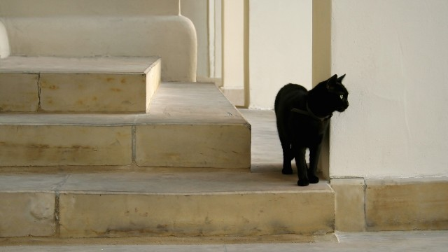 Black cat on the stairs