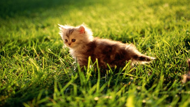 small pussy cat in grass