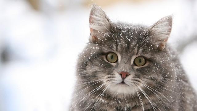 beautiful cats wallpapers hd 2014