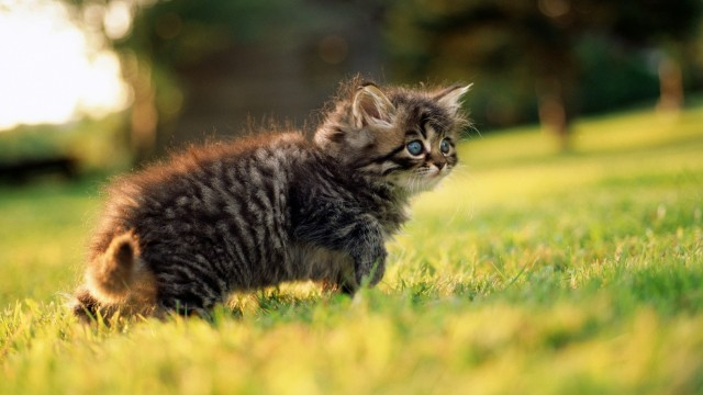 Small cat on the grass