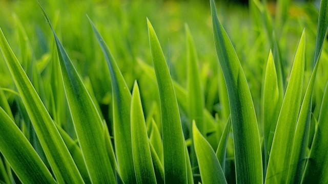 green grass wallpapers best hd wallpapers com