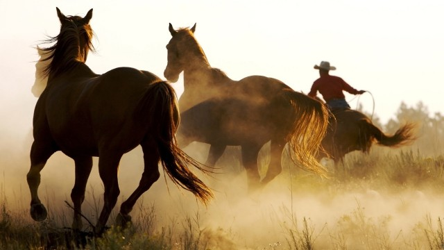 marlboro country horses HD