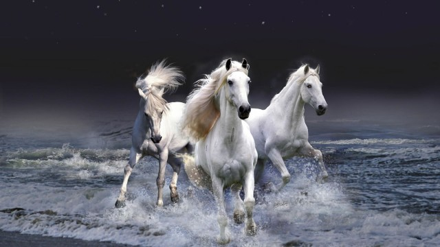 beautiful white horses HD