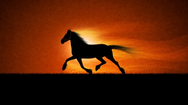 Horse HD photos