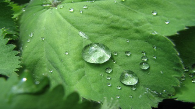 Green Leafs and raindrops