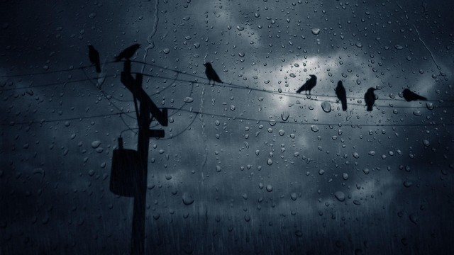 Rain Hd Background Desktop Wallpaper