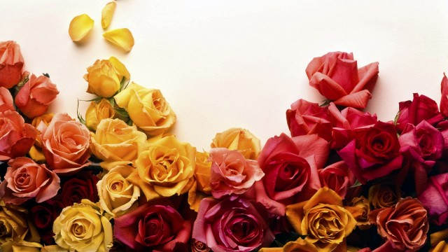colors-of-roses-colors-of-roses-roses-flowers-colors-1920x1080