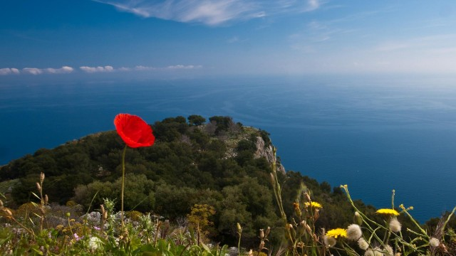 countries, italy, poppy, flowers, nature, mountains, sky, water