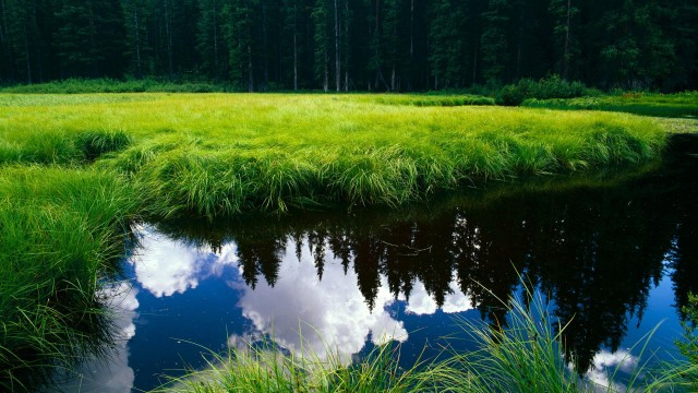 nature, sky, clouds, forest, water, reflection, grass, green-grass
